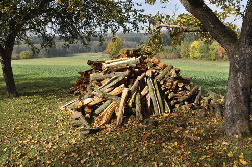 Germany, Nennslingen, Stack of chopped woods in forest - SRSF00106