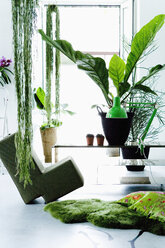 Modern living room with plants - HOEF00279