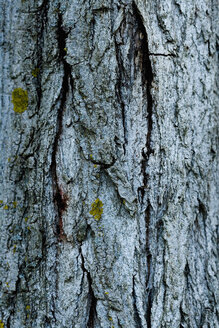 Italy, Close-up of tree bark - HOEF00258