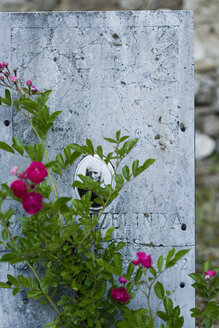 Italy, Cavaleto, Flowers on gravestone - HOEF00255