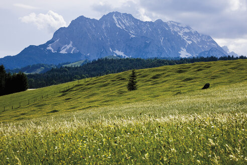 Germany, Bavaria, View of hump-meadow with karwendel mountains in background - 12774CS-U