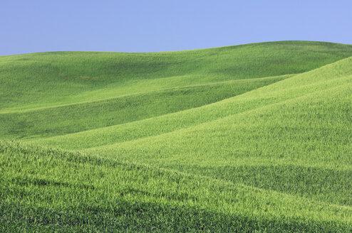 USA, Washington State, View of wheat field - RUEF00402