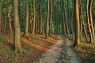 Germany, Ruegen Island, Pathway through beach tree forest - RUEF00381