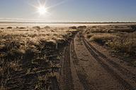Africa, Botswana, Mabuasehube, Offroad track in the Kalahari - FOF002144