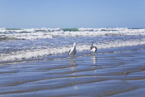 New Zealand, North Island, Seagulls on beach - GWF001261