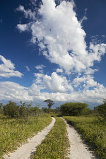Africa, Botswana, View of central kalahari game reserve with track - FOF002211
