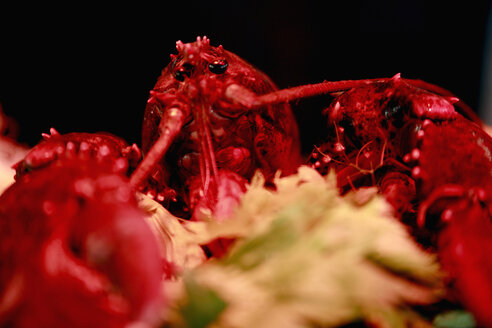 Germany, Close up of lobster - JMF000071
