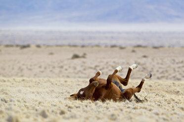 Africa, Namibia, Namib Desert, Wild horse in Namib Naukluft National Park - FOF002341