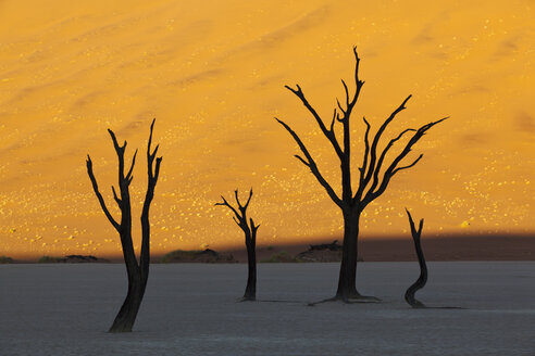 Africa, Namibia, Namib Naukluft National Park, Dead tree in namib desert - FOF002367
