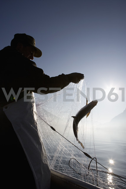 Austria, Mondsee, Fisherman caught a fish in fishing net - WWF001683 - Wolfgang Weinhäupl/Westend61