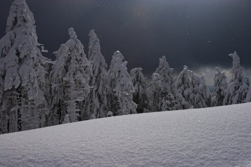Germany, Harz, Fir forest in winter at night - HKF000277