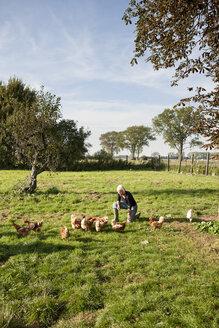 Germany, Saxony, Senior woman with hens at the farm - MBF001039