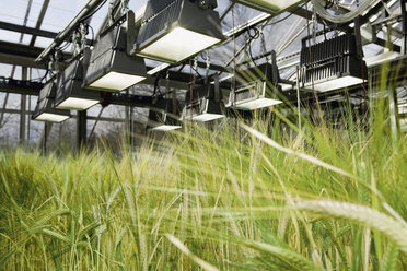 Germany, Grains under heat lamp in greenhouse - WBF000343