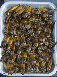 Thailand, Fried beetles in tray - HKF000330