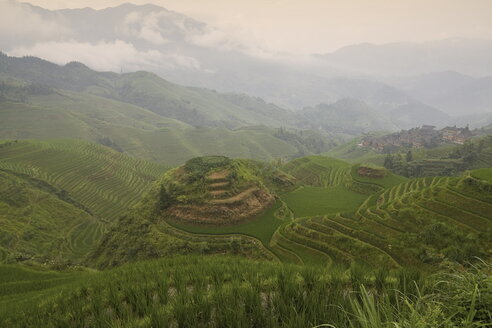China, Loncheng, View of terraced rice field - HKF000314