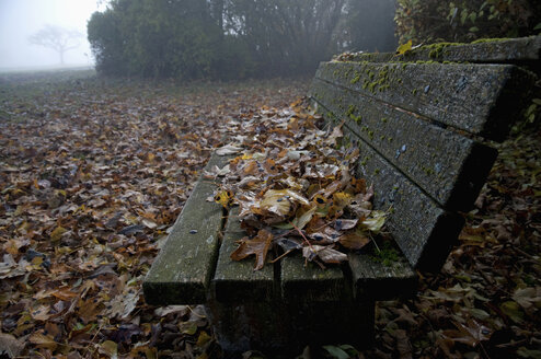 Germany, Bavaria, View of autumn leafs on bench with morning fog - MOF000148