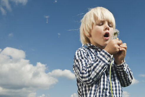 Germany, Cologne, Boy (2-3 Years) blowing dandelion - WESTF015642