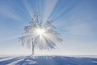 Europe, Switzerland, Canton of Zug, View of tree on snowy landscape - RUEF000627