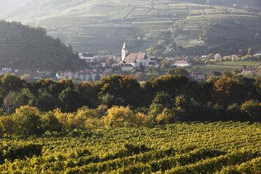 Austria, Lower Austria, Wachau, Spitz, View of vineyard in Arnsdorf - SIEF000128