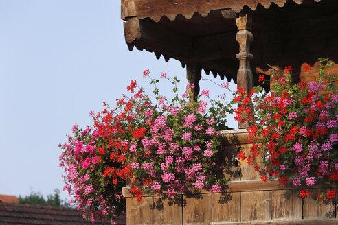Germany, Upper Bavaria, Bavaria, Wooden balcony of farmhouse with geraniums - SIEF000257