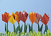Origami tulips against blue background - WBF000872