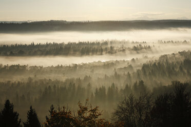 Germany, Bavaria, Upper Bavaria, View of pupplinger au near wolfratshausen in morning - SIEF000873