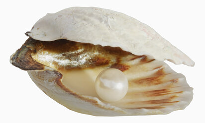 Pearl in empty shell against white background, close up - WBF001187