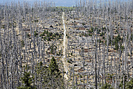 Germany, Bavaria, Lower Bavaria, Forest with dead spruces at bavarian forest - SIE001108