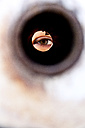 Close up of woman's eye looking through tube - MBEF000106