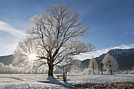 Germany, Bavaria, View of bare trees with frost and mountain in Bavarian foothills of alps - FOF003353