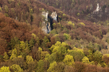 Germany, Bavaria, Franconia, Franconian Switzerland, Wiesenttal, View of deciduous forest in spring - SIEF001439
