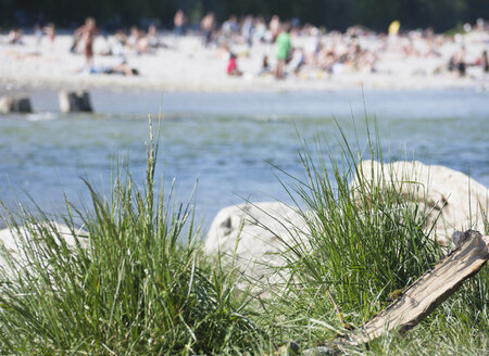 Germany, Bavaria, Munich, Close up of grasses at Isar river with people in background - LFF000273