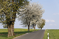 Germany, Bavaria, Franconia, Upper Franconia, Franconian Switzerland, View of empty country road with sweet cherry tree blossoms - SIEF001496