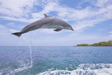 Latin America, Honduras, Bay Islands Department, Roatan, Caribbean Sea, View of bottlenose dolphin jumping in seawater - RUEF000657