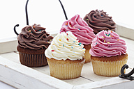 Close up of variety of buttercream cupcakes on tray against white background - CSF014954