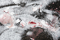 Europe, Germany, Crime scene with footprints and bloodstain in snow, close up - AWDF000631