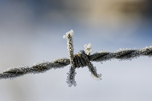 Frosted barbed wire, close up - AWDF000611