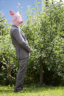 Businessman with pig's head urinating on tree - MAEF003487