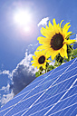 Germany, Cologne, Solar panels with sunflowers against blue sky and sun - TSF000308