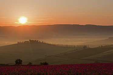 Italy, Tuscany, Crete, View of poppy field in front of farm with cypress trees at sunrise - FOF003516