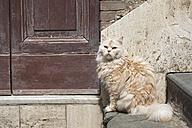 Italy, Tuscany, Crete, Long hair cat sitting besides door - FOF003549