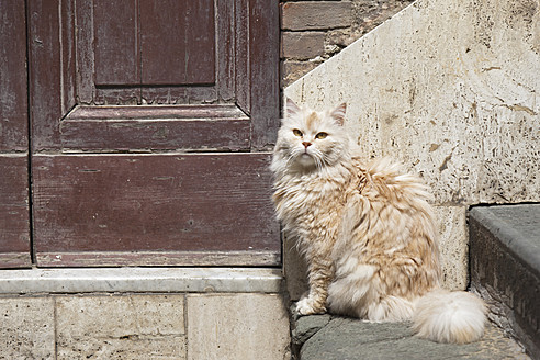 Italy, Tuscany, Crete, Long hair cat sitting besides door - FOF003549