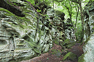 Germany, Rhineland-Palatinate, Eifel Region, South Eifel Nature Park, View of bunter rock formations at beech tree forest - GWF001537