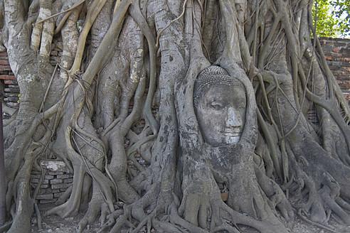 Thailand, Ayutthaya, Buddha head in tree roots - HKF000454
