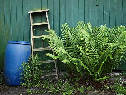 Germany, Hessen, Frankfurt, Garden with ladder, rain barrel, fern and osmundaceae - MU001070