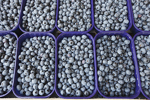 Germany, Bremen, Blueberries in tray at market - KSWF000764