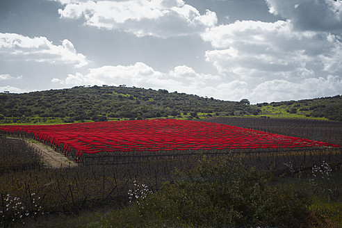 Israel, View of crop field covered with red cloth - TLF000579