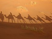 North Africa, Morocco, Merzouga, Shadows of a caravan with camels and tourists on sand - BSCF000076
