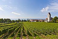 Germany, Baden-Wurttemberg, Hagnau, View of vineyards - WDF001088