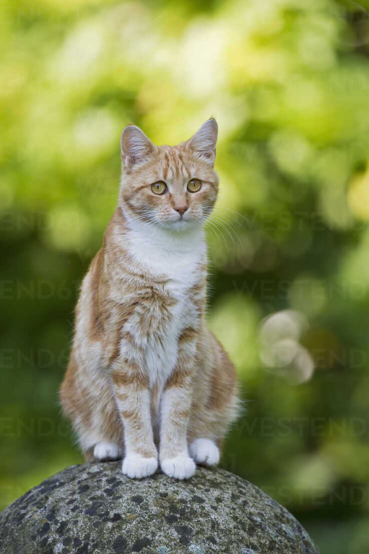 Germany, Ginger cat sitting on stone - FOF003613 - Fotofeeling/Westend61